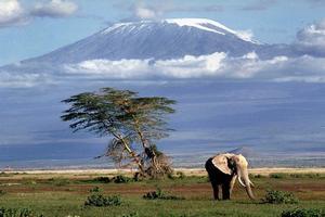 Kilimanjaro P