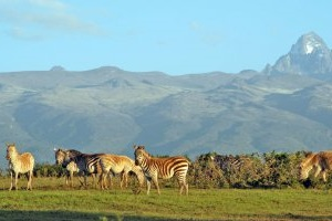 Mount_Kenya_gallery_preview