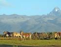 Mount_Kenya__7